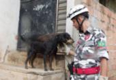 Lançada campanha de doação para arrecadar alimentos para animais de rua | Foto:
