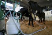 Iniciativa favorece venda de leite | Foto: Joá Souza | Ag. A TARDE