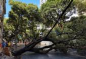 Queda de árvore deixa trânsito interditado no Corredor da Vitória | Foto: Iuri Rubim | Cidadão Repórter
