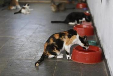 Não se deve usar detergente ou álcool em gel em cães e gatos, afirmam veterinários | AFP
