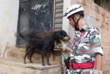 Lançada campanha de doação para arrecadar alimentos para animais de rua |