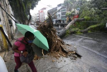 Árvore de grande porte cai na região do Campo Grande; trânsito é desviado | Rafael Martins | Ag. A TARDE
