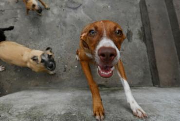 EUA suspende entrada de cães do Brasil e de outros 112 países | Rafael Martins | Ag. A TARDE