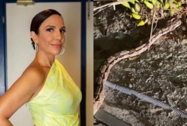 Ivete Sangalo encontra cobra no quintal de casa e se surpreende | Reprodução | Incasastagram