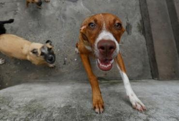 Iniciativas pelo bem-estar animal precisam de doações | Rafael Martins | Ag. A TARDE