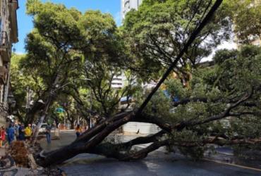 Queda de árvore deixa trânsito interditado no Corredor da Vitória | Iuri Rubim | Cidadão Repórter