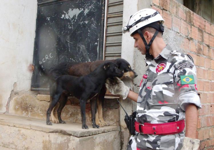 Casos de abandono de animais aumentou após o início da pandemia de coronavírus | Foto: Divulgação - Foto: Divulgação