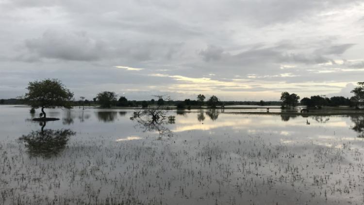 Espelho d'água de uma lagoa em uma das fazendas da Ilha de Marajó | Foto: Flavimir Guimarães | Divulgação
