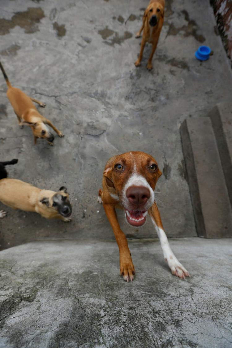 Cães no abrigo São Francisco de Assis | Foto: Rafael Martins | Ag. A TARDE - Foto: Rafael Martins | Ag. A TARDE