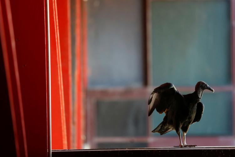 Não se pode tolerar, em hipótese alguma, a oportunidade da rapina | Foto: Rafael Martins | Ag. A TARDE - Foto: Rafael Martins | Ag. A TARDE
