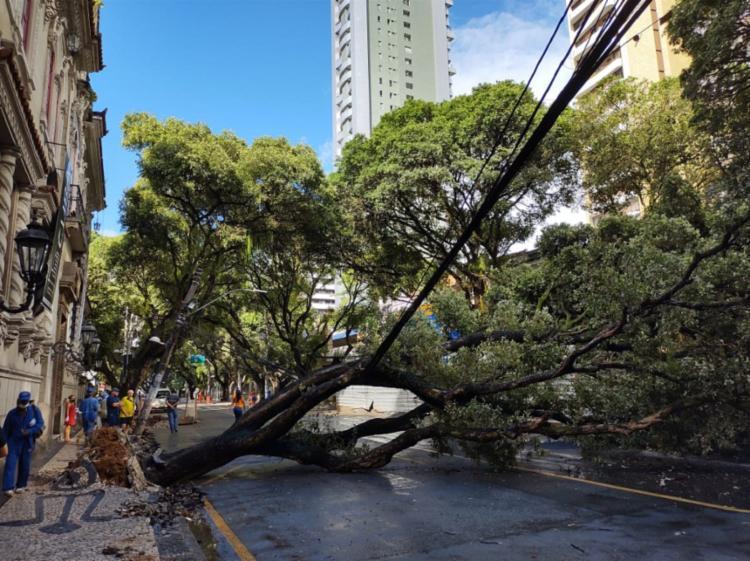Árvore ocupou toda a via   Foto: Iuri Rubim   Cidadão Repórter - Foto: Iuri Rubim   Cidadão Repórter