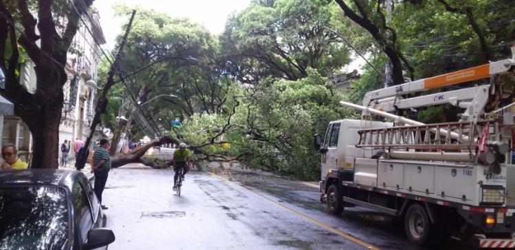 Equipes da Seman estão no local para retirar a árvore   Foto: Leow Lopes   Cidadão Repórter