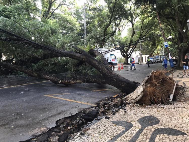 Raízes danificaram a calçada   Foto: Leow Lopes   Cidadão Repórter