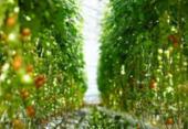 Agro.Br tenta retomar negócios com a China | Foto: Divulgação | Freepik