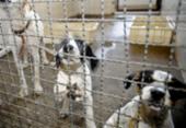 Adoção de animais domésticos é opção em meio ao isolamento social | Foto: Fábio Pozzebom | Agência Brasil