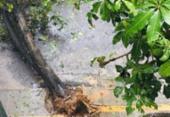 Queda de árvore interdita rua no bairro da Barra | Foto: Cidadão Repórter | Via WhatsApp