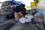 Homem é preso com 70kg de drogas em Simões Filho | Foto: Divulgação | PRF