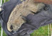 Macaco em risco de extinção é resgatado em Lençóis | Divulgação | SSP-BA