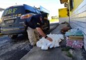 Homem é preso com 70kg de drogas em Simões Filho | Divulgação | PRF