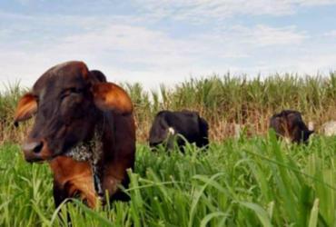 Projeto do agro da BA é aprovado na ONU | Divulgação | Seagro