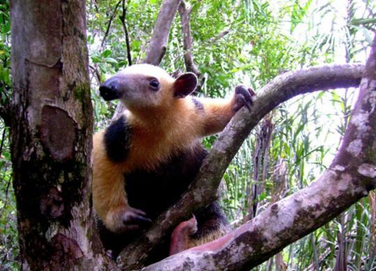 Movimento reduzido atrai animais para áreas urbanas | Moacir Tinoco | Divulgação