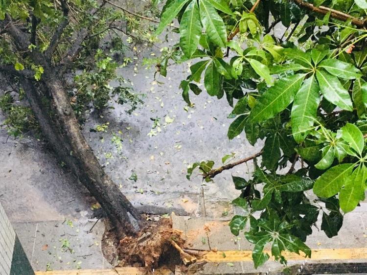 Incidente comprometeu fornecimento de energia elétrica na região | Foto: Cidadão Repórter | Via WhatsApp - Foto: Cidadão Repórter | Via WhatsApp