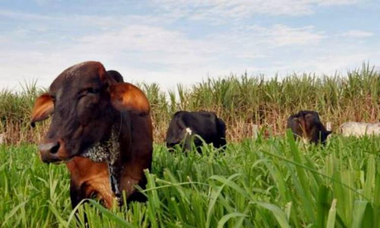 O ABC Cerrado capacitou perto de oito mil produtores rurais do bioma   Foto: Divulgação   Seagro - Foto: Divulgação   Seagro