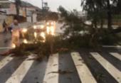 Ciclone bomba e tempestades provocam estragos em Santa Catarina | Foto: Divulgação | Guarda Municipal de Florianópolis
