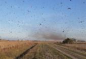 Governo traça diretrizes para eventual combate a gafanhotos no país | Foto: Reprodução | Twitter