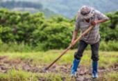 Agro brasileiro quebra recorde | Foto: Divulgação | Freepik