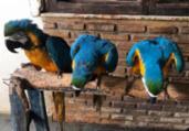 Polícia agiu sem mandado, diz dono de aves apreendidas | Divulgação | SSP