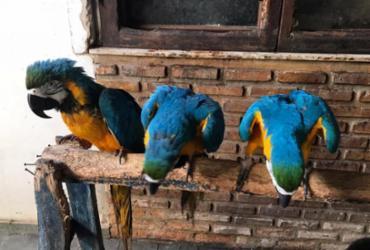 Oito araras amarelas são resgatadas de cativeiro em Salvador |