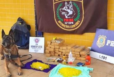 Drogas são apreendidas com ajuda de cães farejadores em Feira de Santana