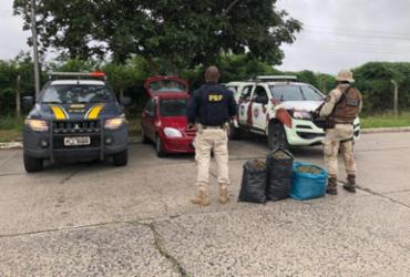 Três sacos de maconha são apreendidos em fiscalização na BR-116