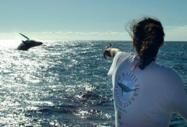 Completando 32 anos, Projeto Baleia Jubarte ajudou no crescimento da espécie no litoral | Divulgação | Projeto Baleia Jubarte