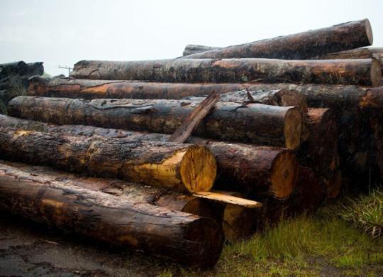 Polícias do Amazonas realizam operação contra desmatamento ilegal | Marcelo Camargo | Agência Brasil
