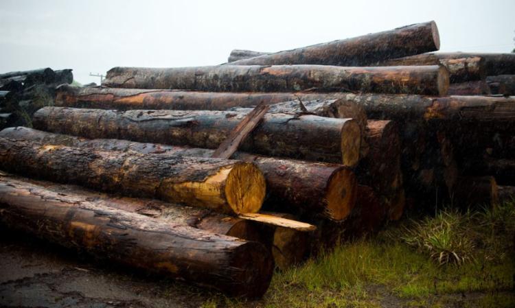 Operação visava prender 35 suspeitos de comércio ilegal de madeira   Foto: Marcelo Camargo   Agência Brasil - Foto: Marcelo Camargo   Agência Brasil