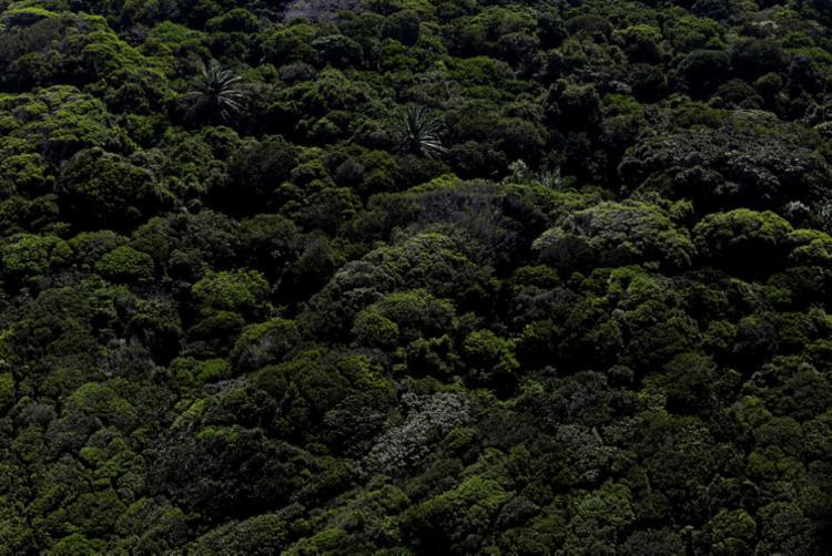 Mata Atlântica mantém apenas cerca de 7% da sua cobertura original no País | Foto: Raul Spinassé | Ag. A TARDE - Foto: Raul Spinassé | Ag. A TARDE