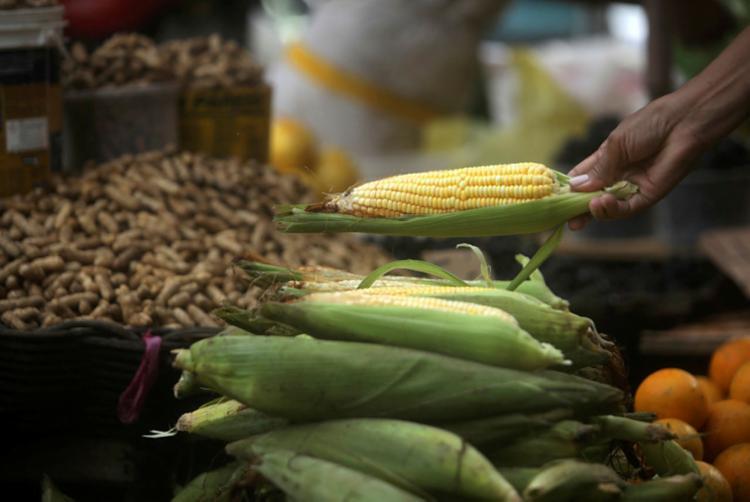 Amendoim e milho, duas estrelas da culinária junina, estão com preços estáveis | Foto: Felipe Iruatã | Ag. A TARDE - Foto: Felipe Iruatã | Ag. A TARDE