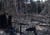 Desmatamento ilegal da Amazônia em Mato Grosso atingiu a marca de quase 90% nos últimos 12 anos | Foto: Agência Brasil