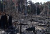 Carta de ex-ministros e ex-presidentes do BC cobra ações contra desmatamento | Foto: Agência Brasil