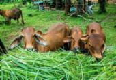 Mercado de boi gordo busca ampliar lucro | Foto: Divulgação | Freepik