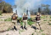 Plantação de maconha é erradicada pela PM na Bahia   Divulgação