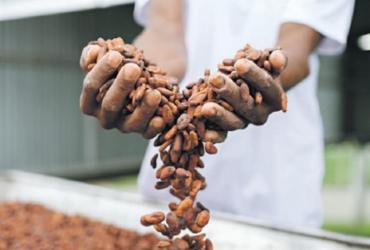 Bendito cacau: produtores baianos de chocolate analisam o momento para o setor | Ana Lee | Divulgação