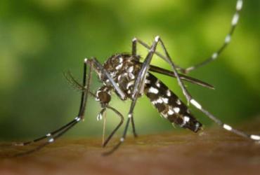 Casos de chikungunya crescem 434% na Bahia | Divulgação