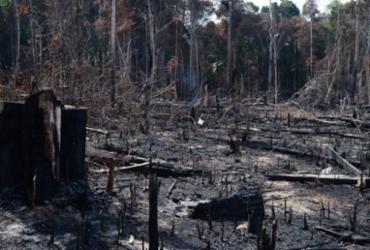 Desmatamento ilegal da Amazônia em Mato Grosso atingiu a marca de quase 90% nos últimos 12 anos | Agência Brasil