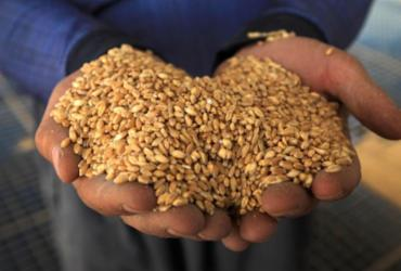 Brasil aumenta cota de trigo importado sem tarifas de países de fora do Mercosul | Safin Hamed | AFP
