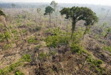 Amazônia tem desmatamento recorde no primeiro semestre de 2020 | Getty Images | via AFP