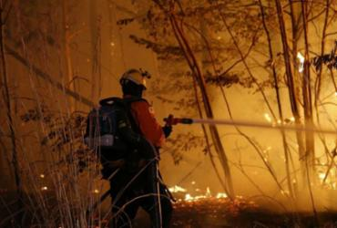 Incêndio atinge área de 163 hectares na Floresta Nacional de Brasília  