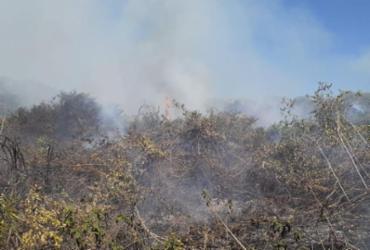 Incêndio destrói área do Pantanal perto de Corumba | Divulgação | CBMMS